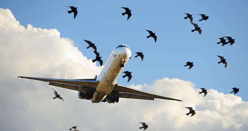 Uav bird